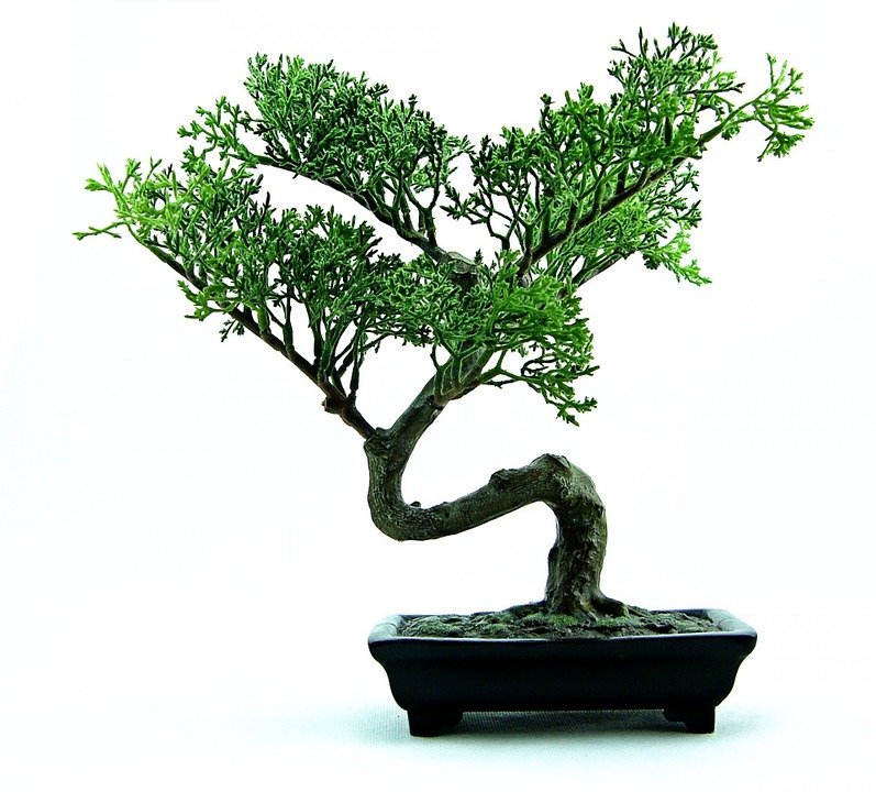 Come Rinvasare un Bonsai
