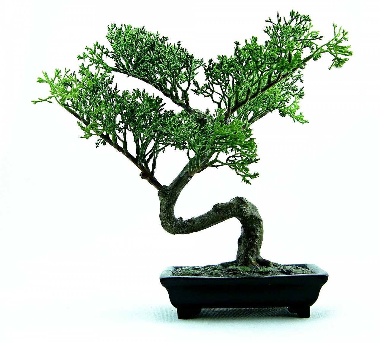 Come Fare un Innesto Laterale sui Bonsai
